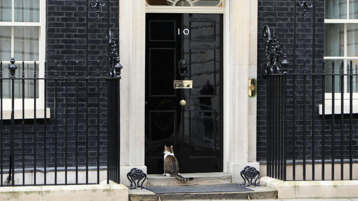 Kocour Larry před svým domovem v Downing Street 10
