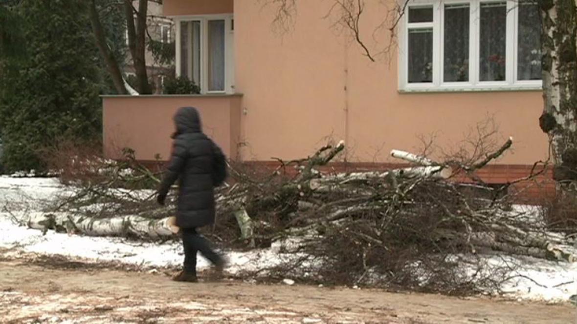 Spadlý strom v Přerově