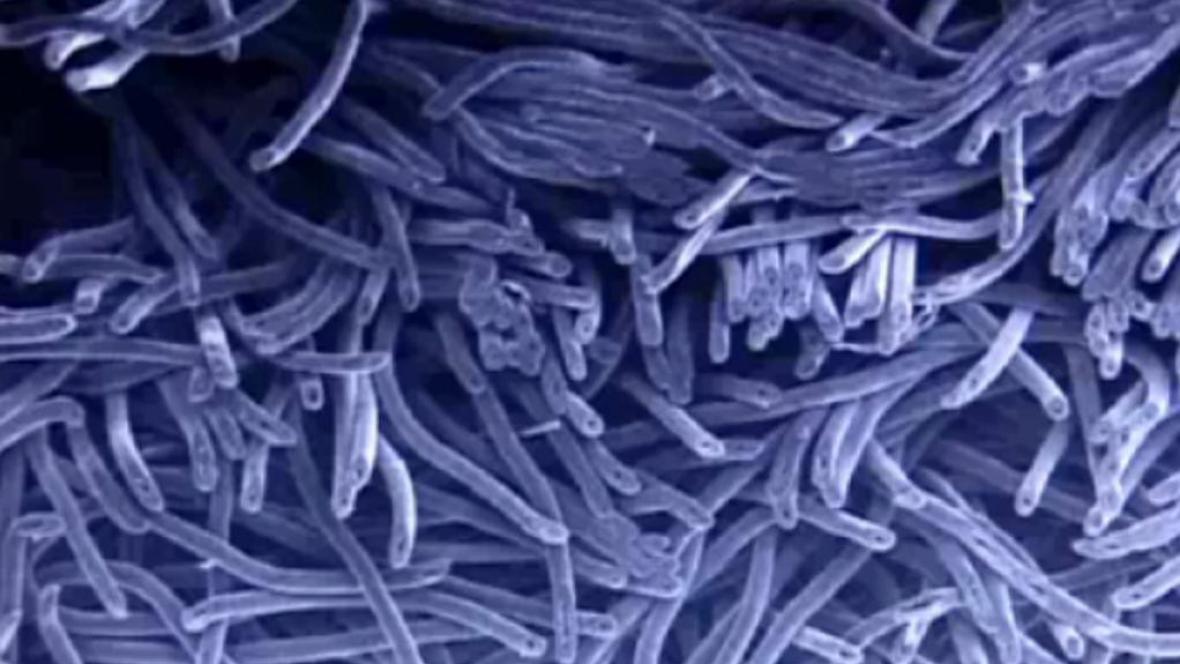 Koaxiální nanovlákna
