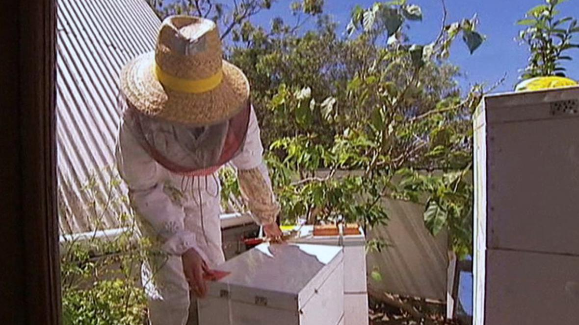 Včelaření na balkonech a střechách v Austrálii