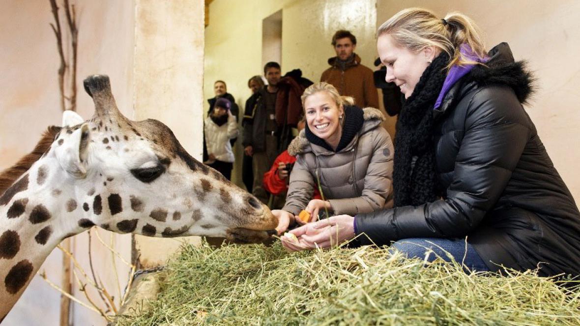 Andrea Hlaváčková a Lucie Hradecká křtí žirafy