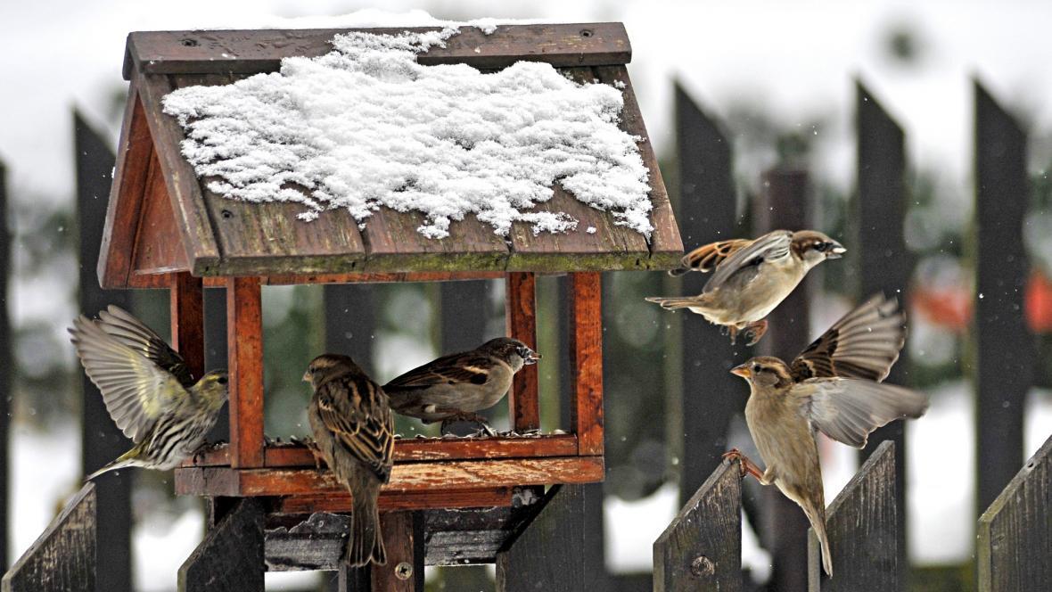 Ptáci u krmítka