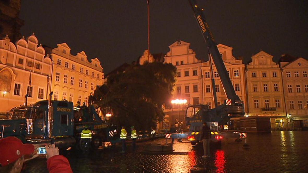 Zvedání stromu