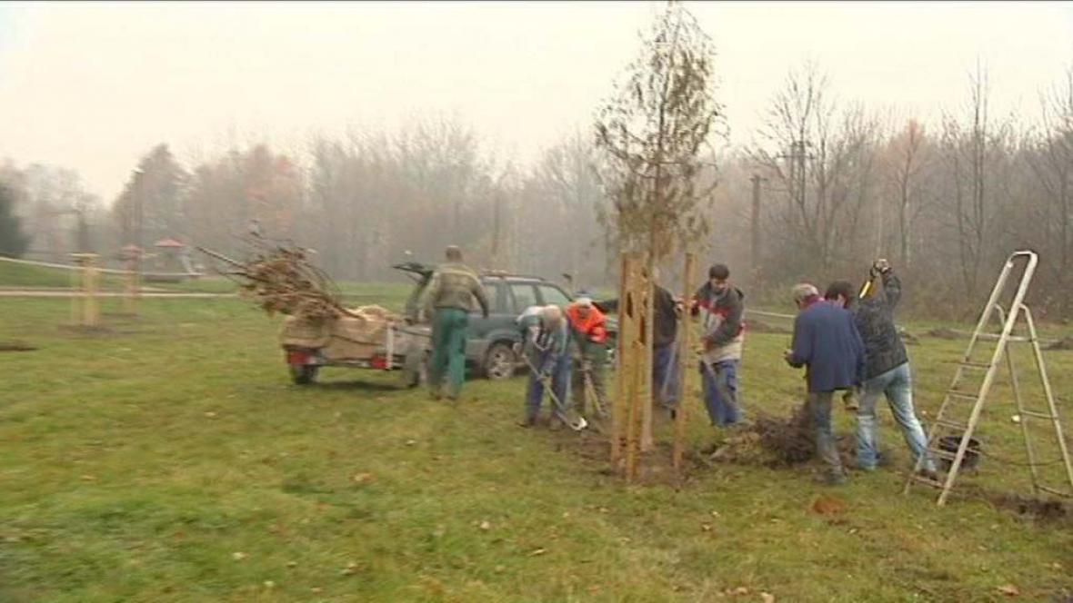 Výsadba nových stromů