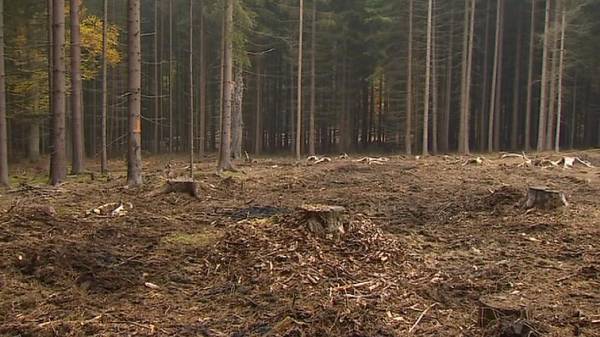 Mýtina po nelegálně vykácených stromech