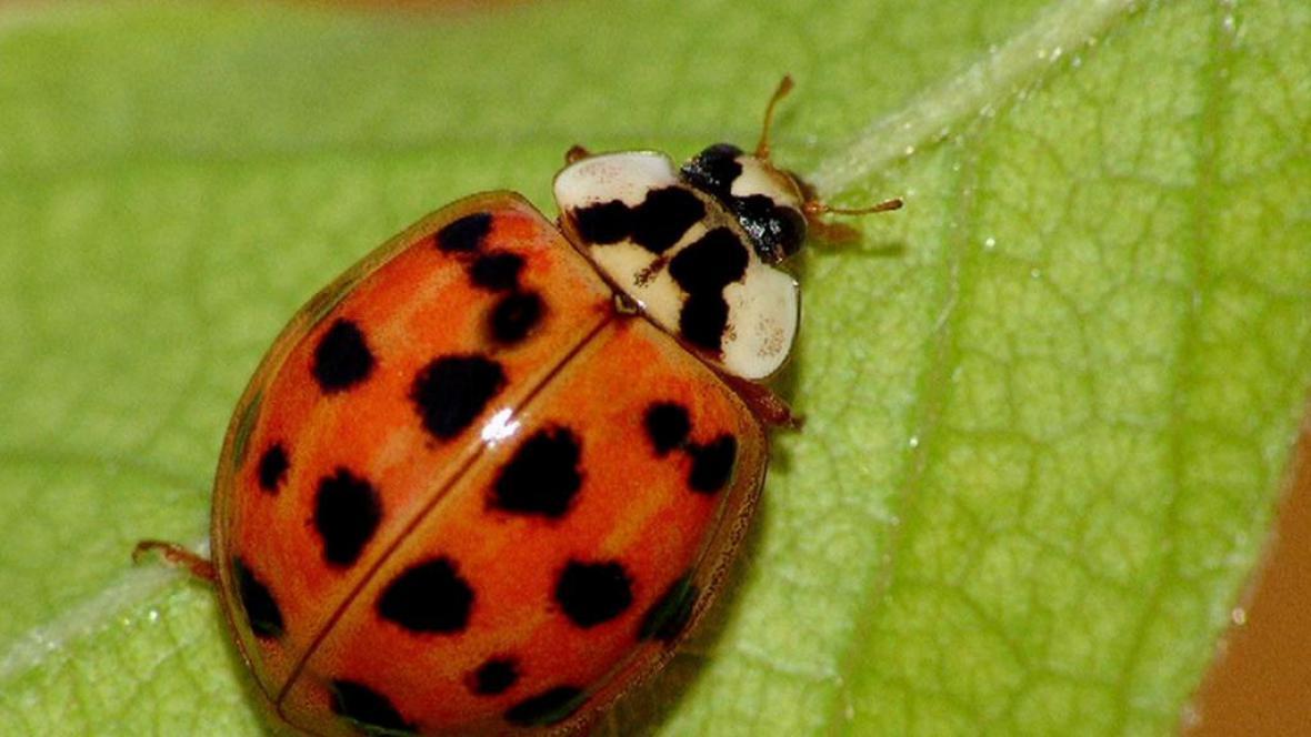 Počet nepůvodních druhů v Evropě dál roste