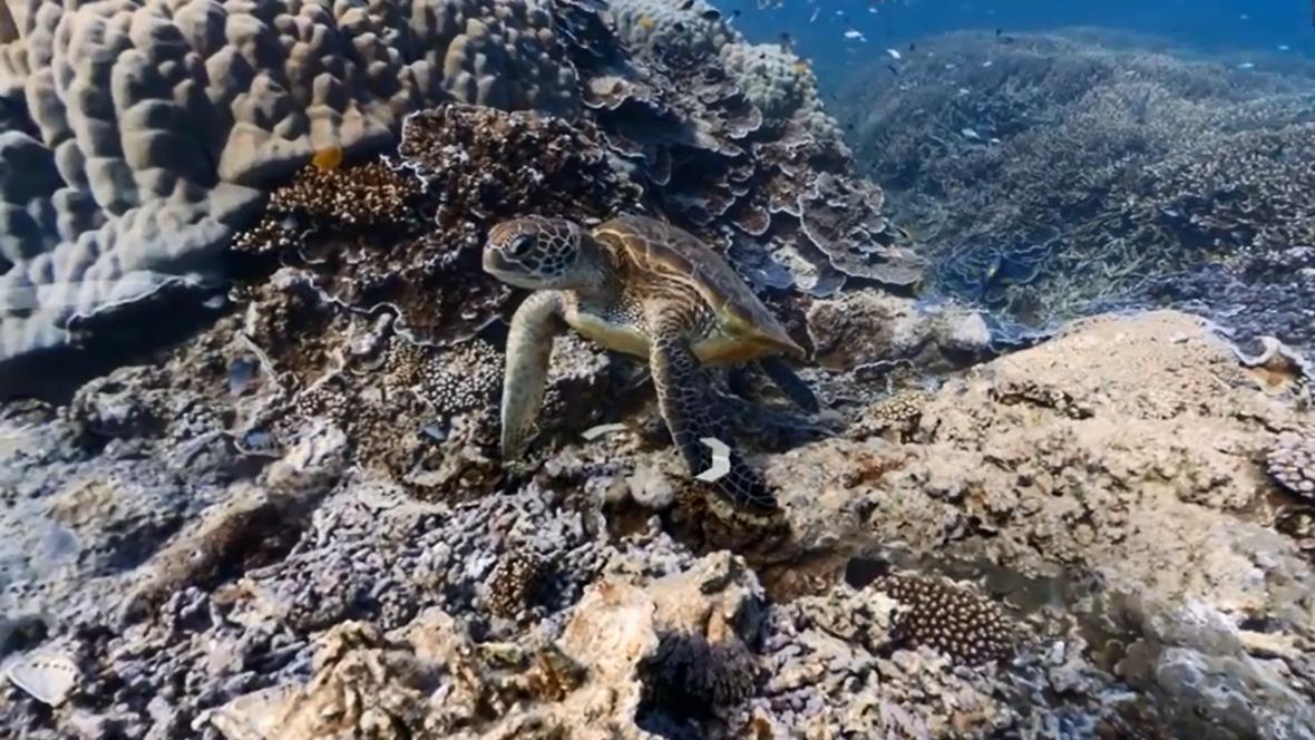 Pohled pod moře se Street View