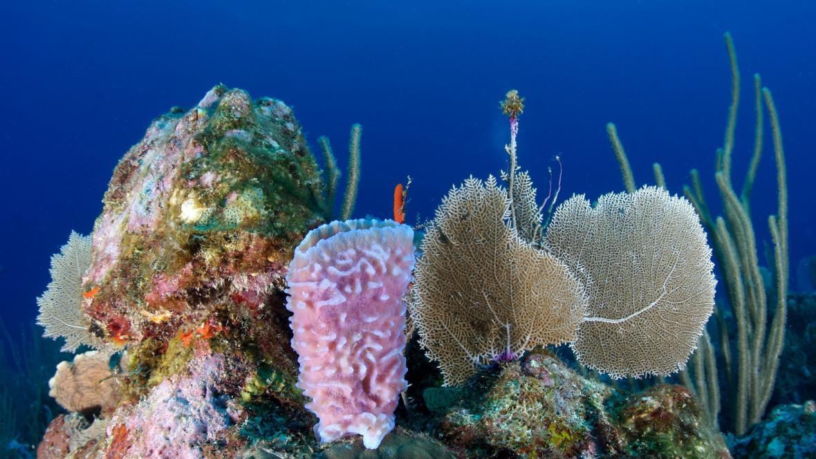 Korálový útes v Belize