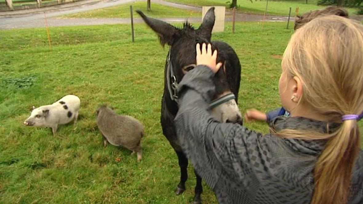 Děti mezi zvířaty