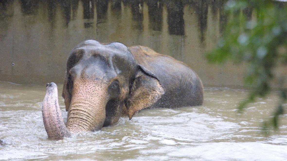 Povodně v pražské zoo - rok 2002