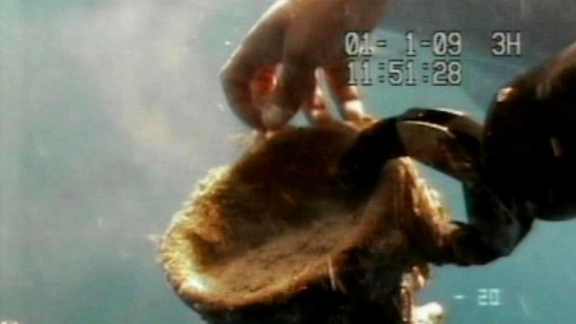 Amfora nalezená ve vraku italské lodi