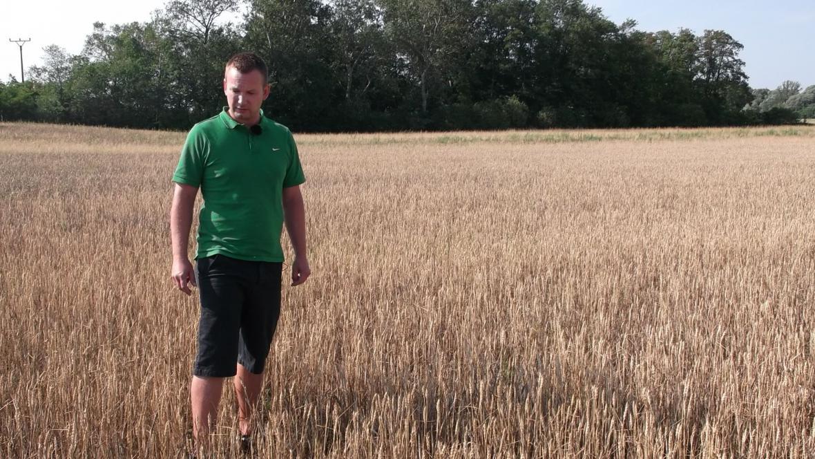 Tak špatnou úrodu pšenice nepamatujeme, shodují se zemědělci