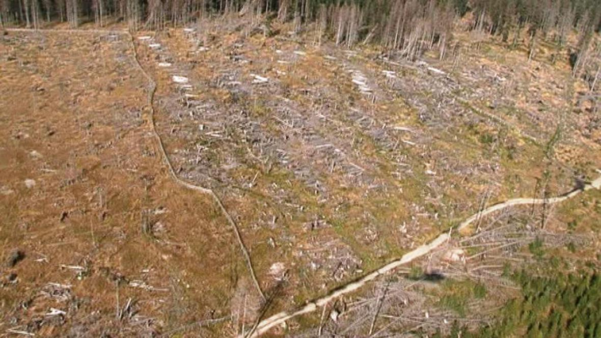 Zdevastovaný les