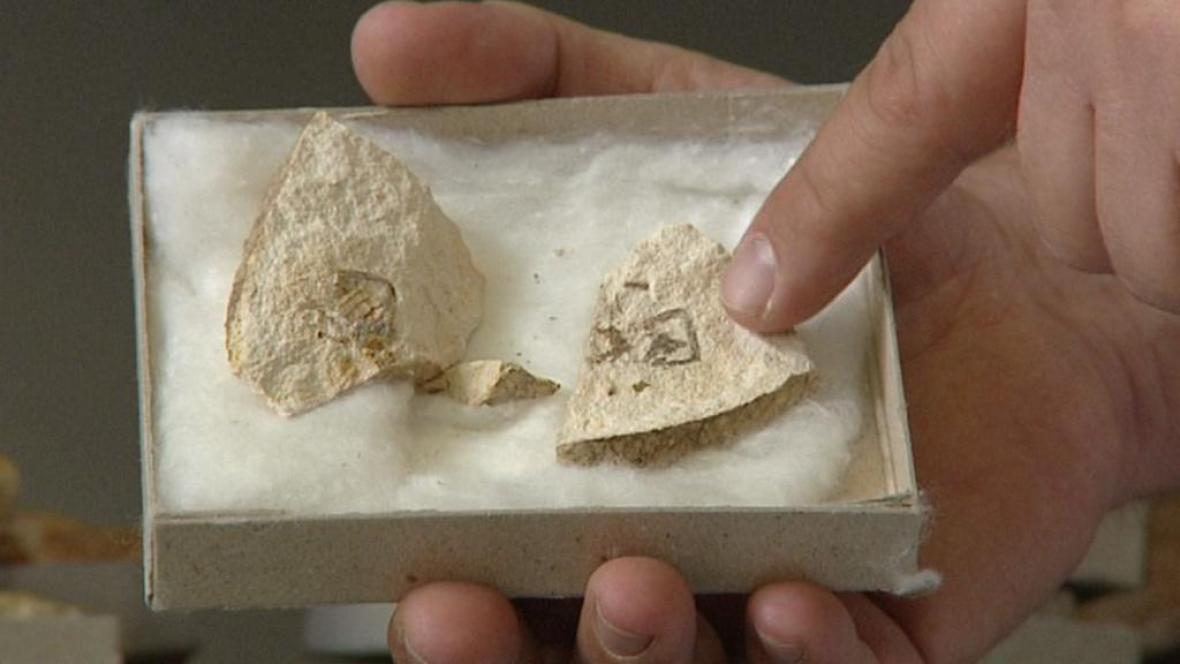Zkamenělina