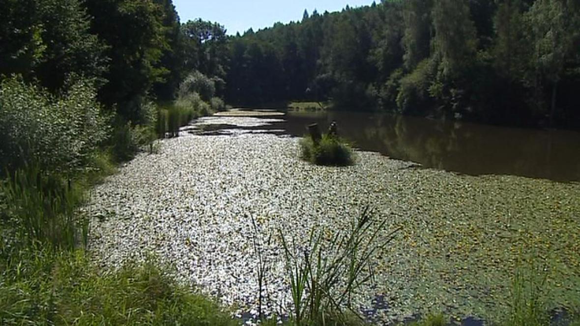 Údolí Rudolfovského potoka