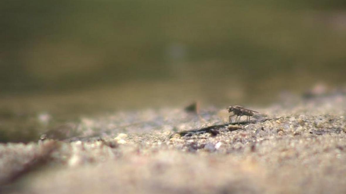 Ovádi trápí Moravu