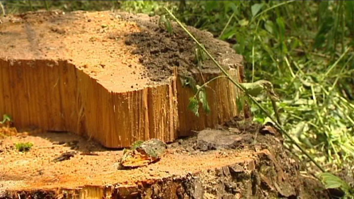 Foto poškozeného stromu