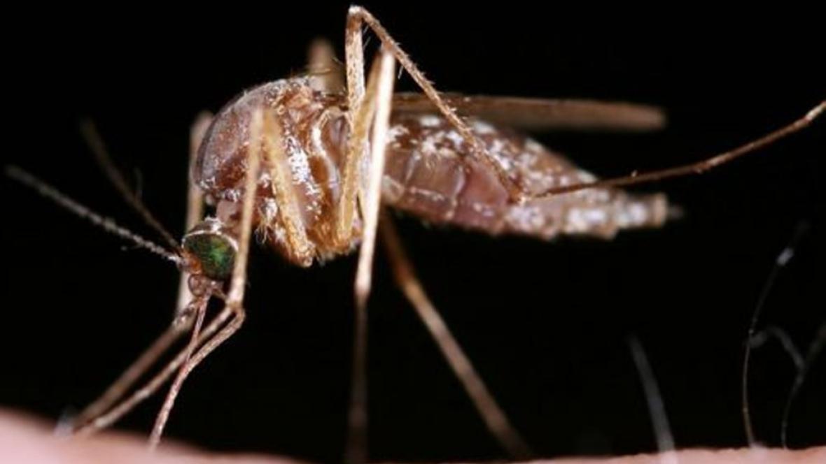 Komáři letos obyvatele jižní Moravy obtěžovat nebudou