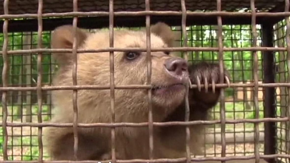 Medvídě Nastia