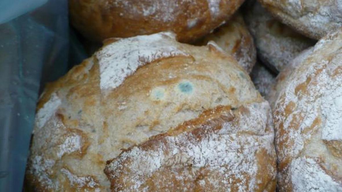 Plíseň na pečivu z litoměřického Kauflandu