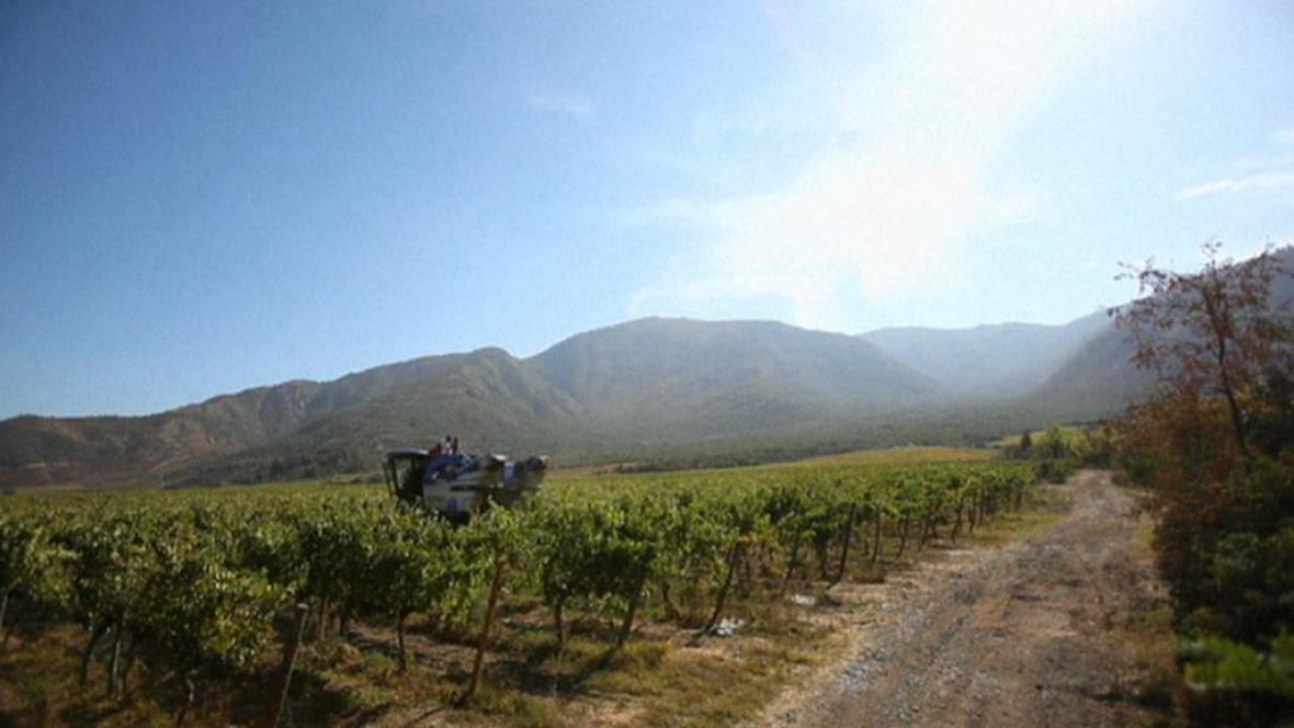 Vinice v Chile
