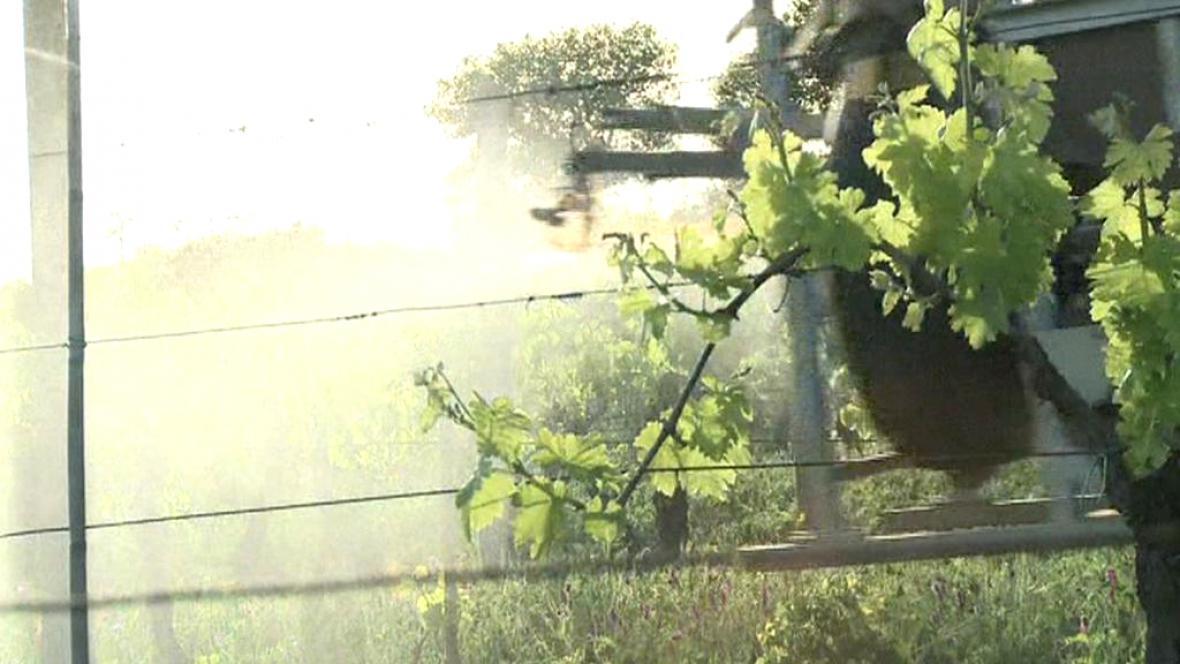 Postřik vinohradu