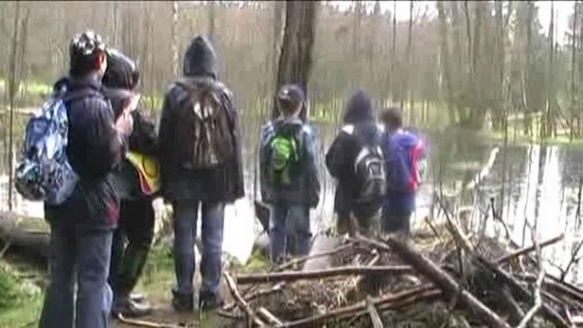 Žáci studují život v rybníku