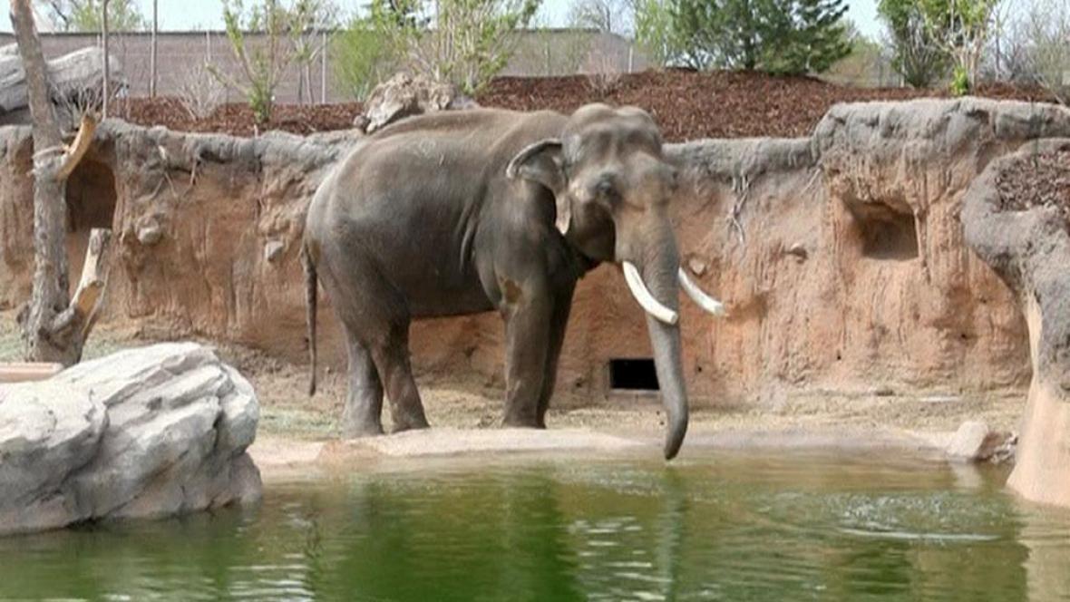 Slon v denverské zoo