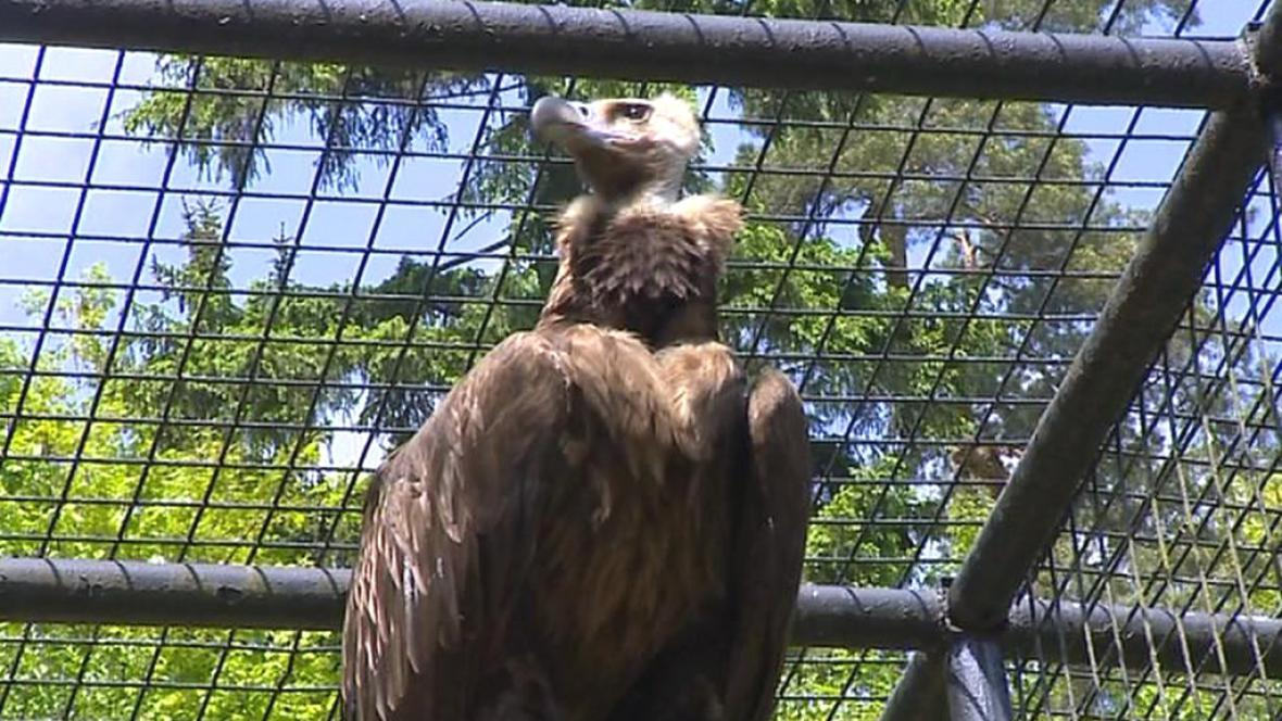 Dravce v liberecké zoo plaší pyrotechnika