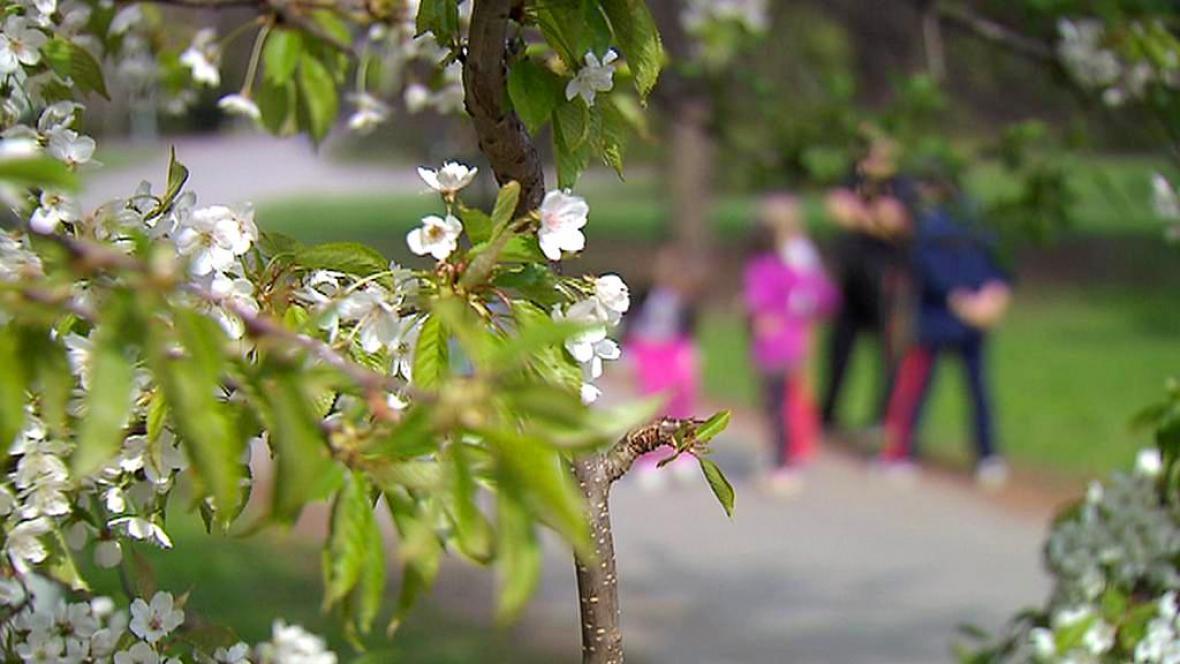 Pro alergiky začíná hlavní pylová sezona
