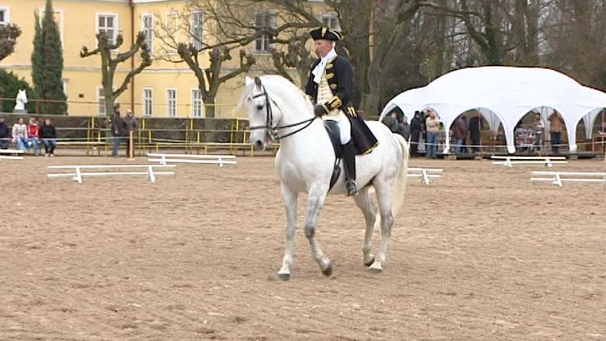 Předvádění koně před dražbou