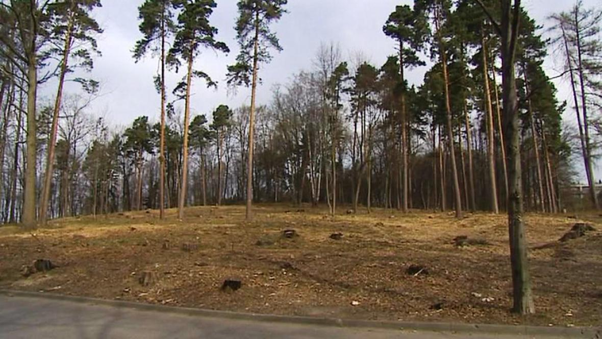 Vykácený les v Dobré Vodě