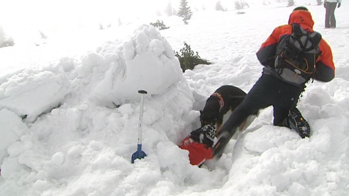 Cvičení lavinových psů