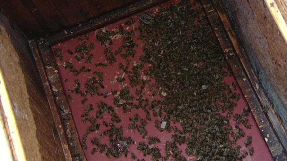 Vymrzlé včelstvo