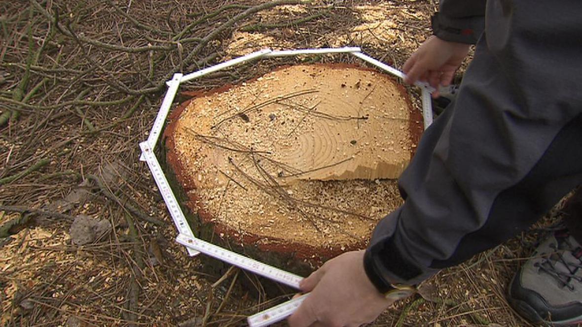 Kmen poraženého stromu