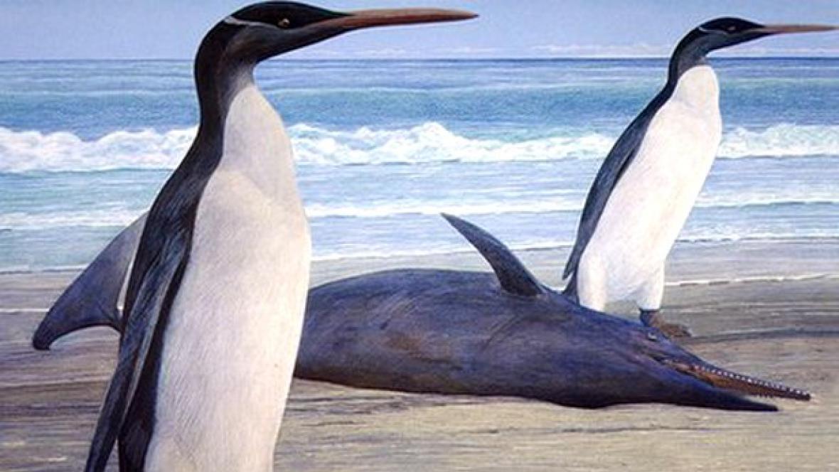 Vyhynulý velký tučňák