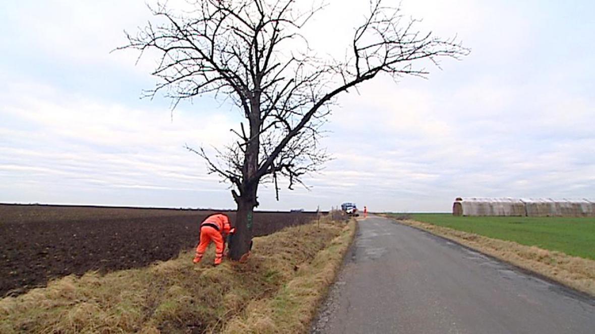 Kacení stromů