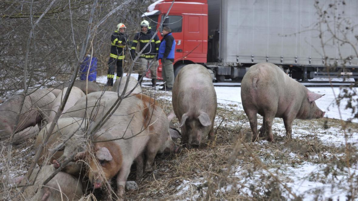 U Olomouce začal hořet kamion převážející prasata