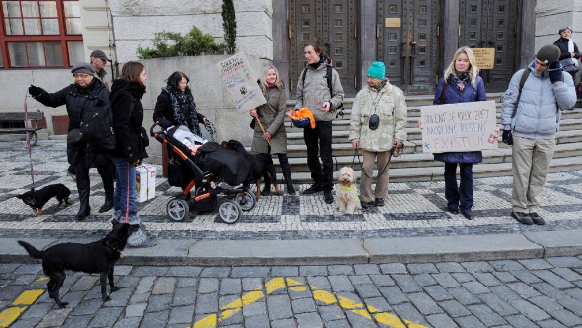 Psí demonstrace proti solení chodníků