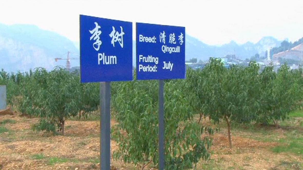 Čínský ovocný sad