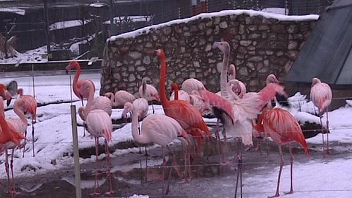 Liberecká zoo