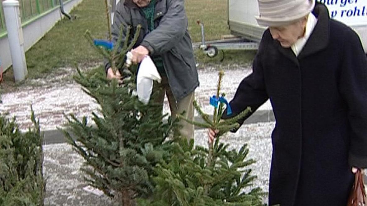 Výběr vánočního stromku