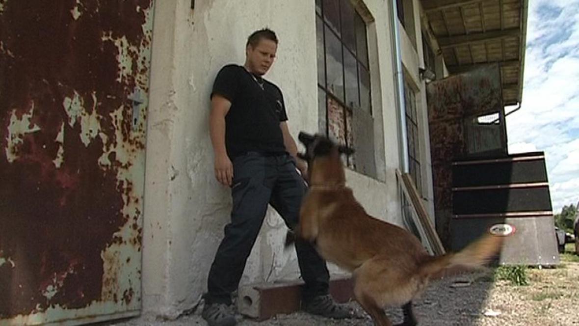 Speciální výcvik psa