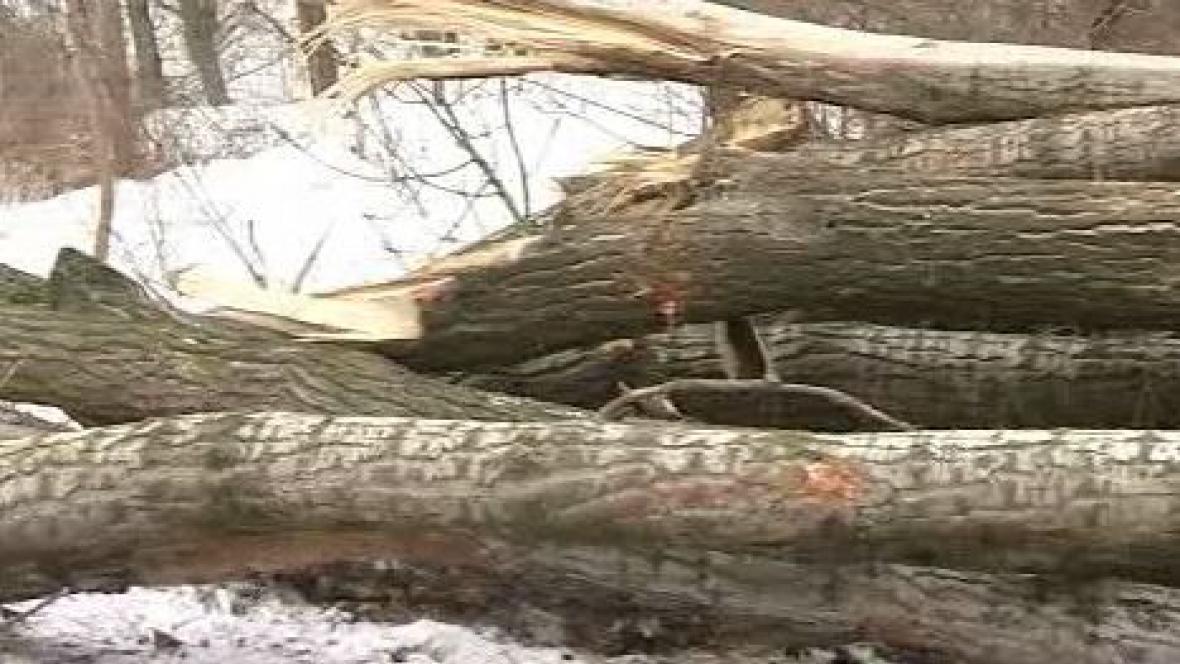 Padlé stromy
