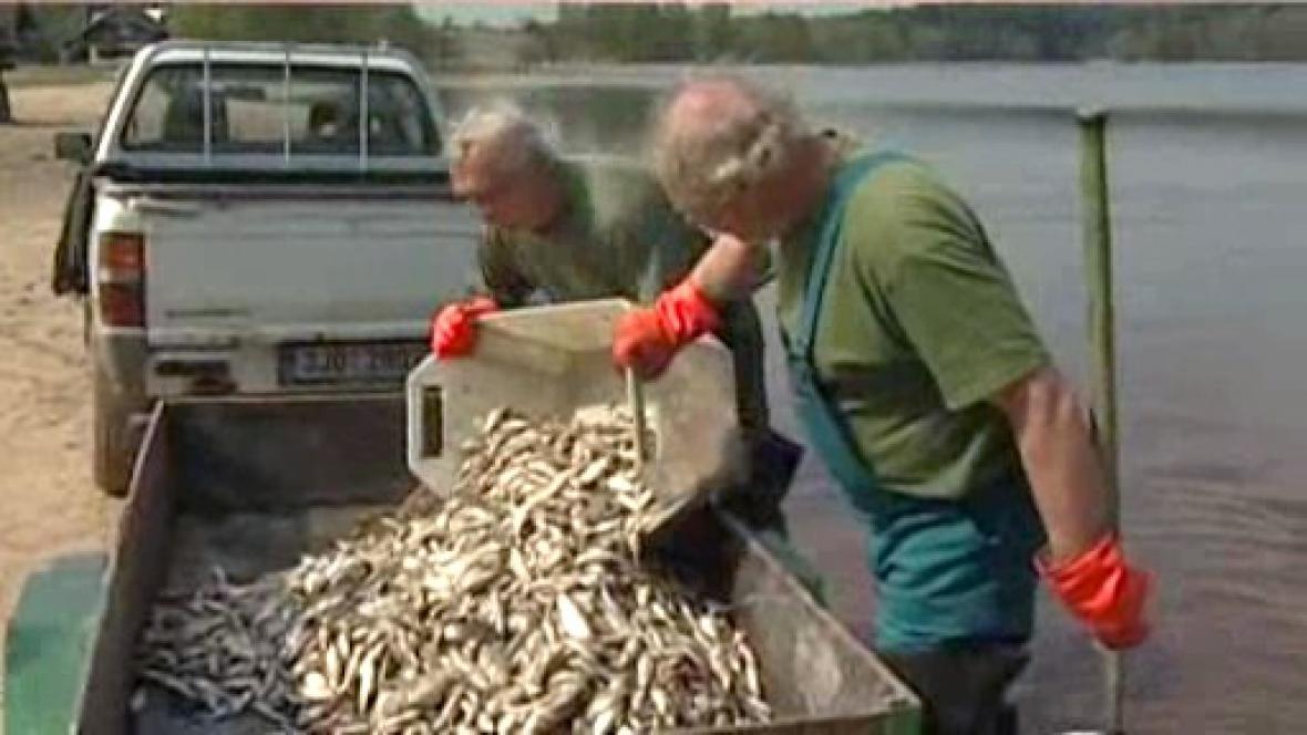 Výlov mrtvých ryb