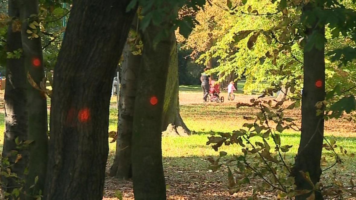 V Uherskohradišťském parku padne přes 130 stromů