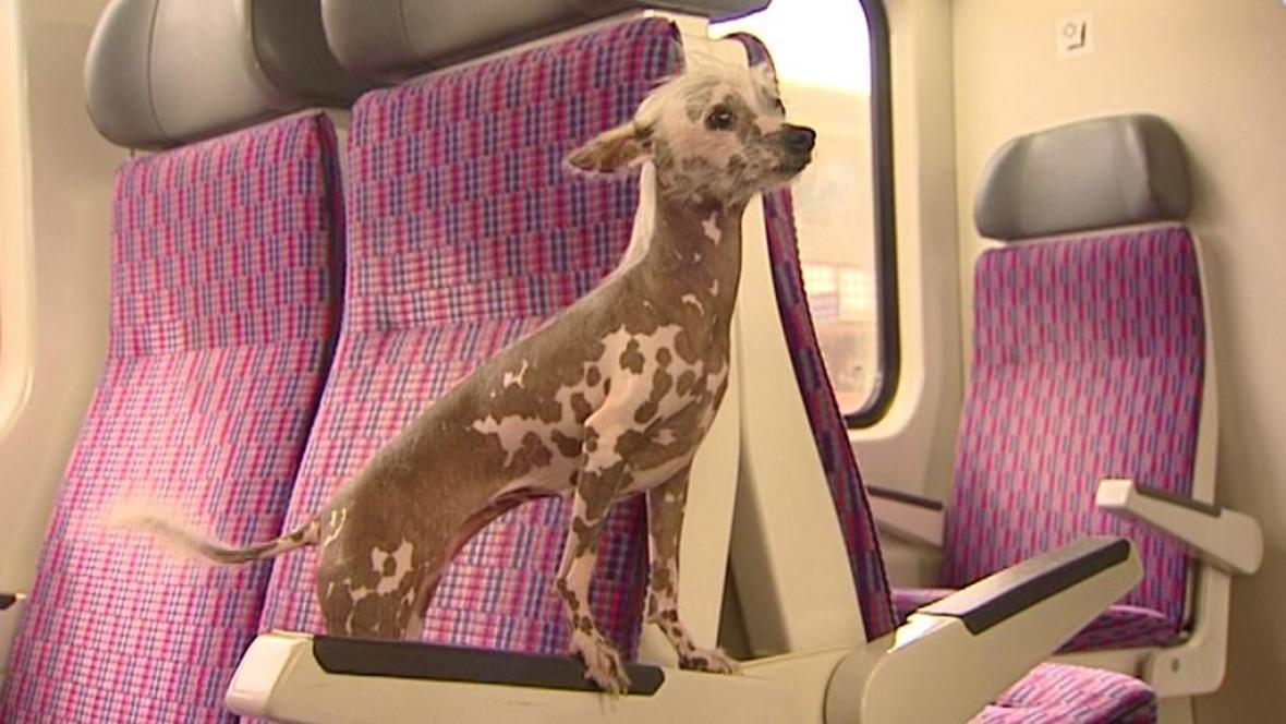 Pes ve vlaku