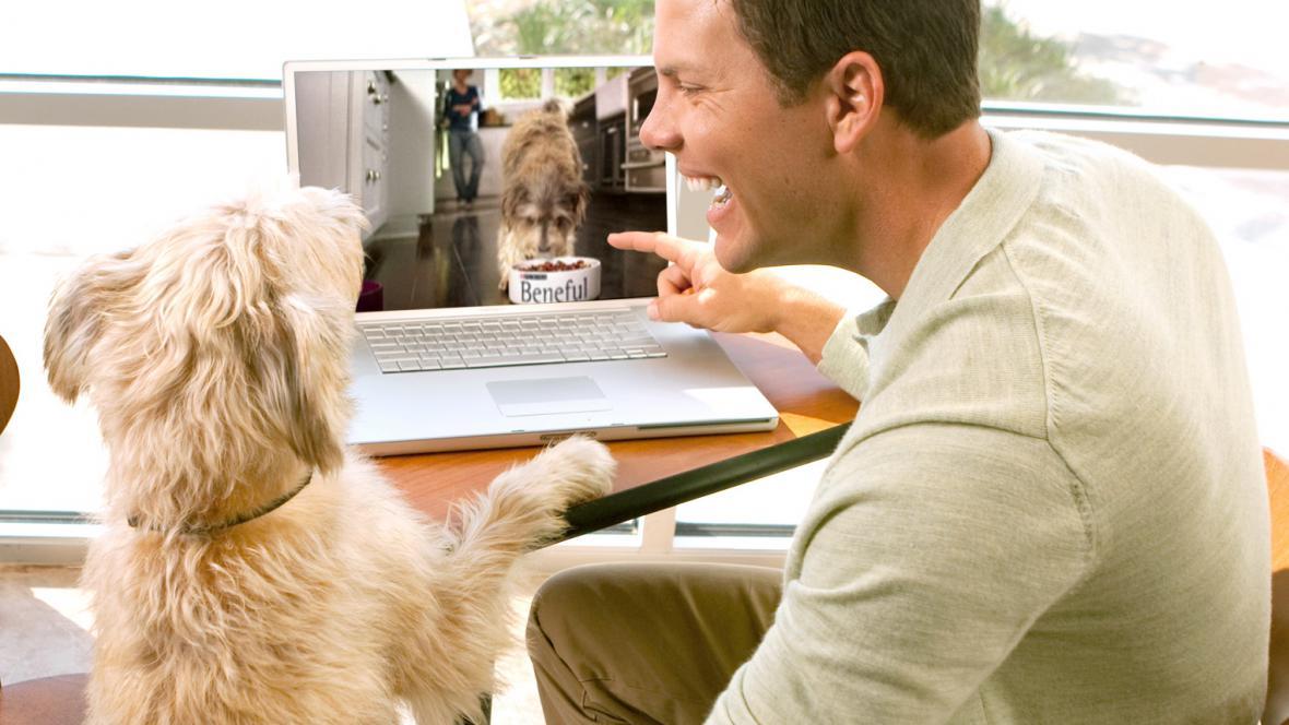 Reklama pro psy
