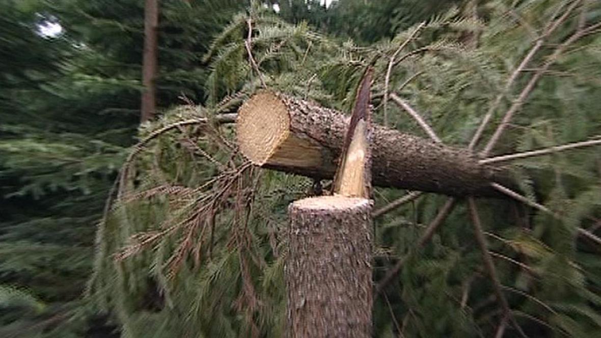 Poničený strom