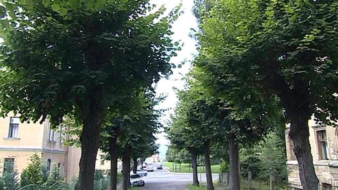 Stromy v libereckých Lidových sadech